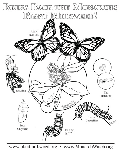 Monarch Butterfly Life Cycle Coloring Page Entrancing Parent And Teacher Notes On Bas Relief Products