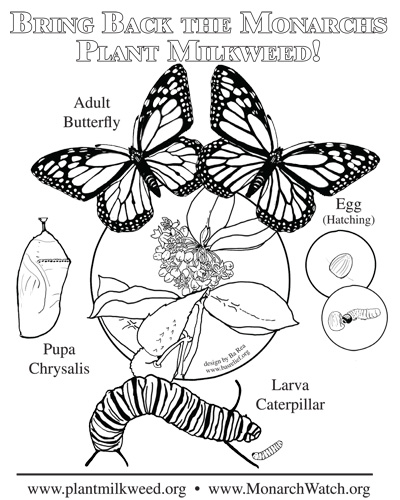 Monarch Butterfly Life Cycle Coloring Page Brilliant Parent And Teacher Notes On Bas Relief Products